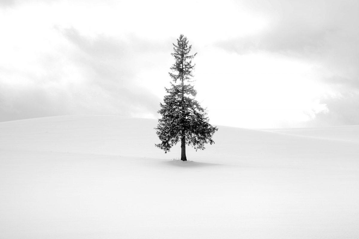 Biei - Hokkaido - Christmas Tree