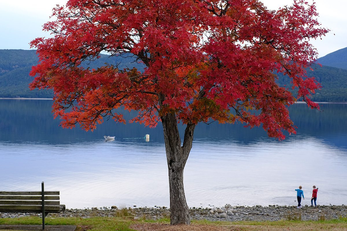 Te Anau - New Zealand