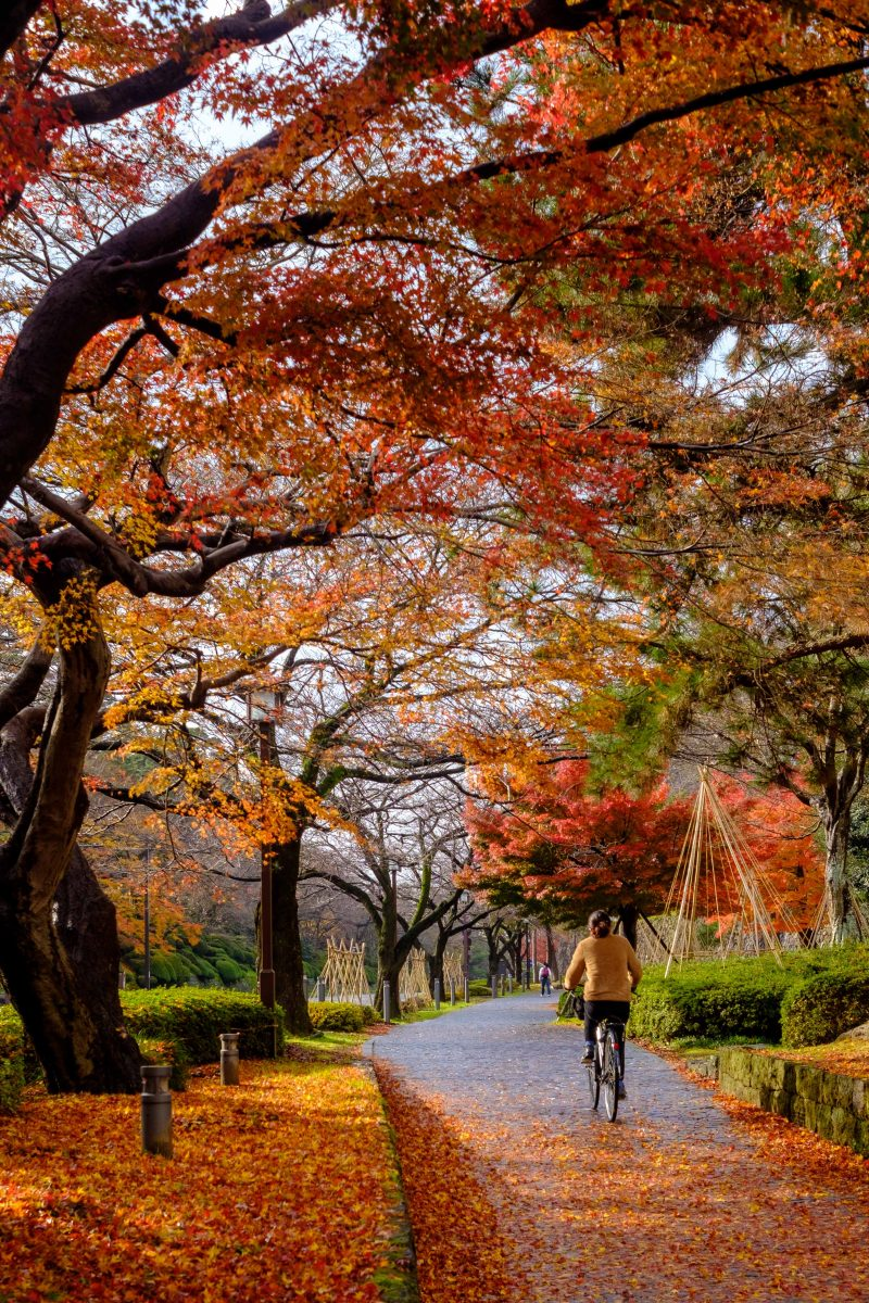 Kanazawa Fall Colors