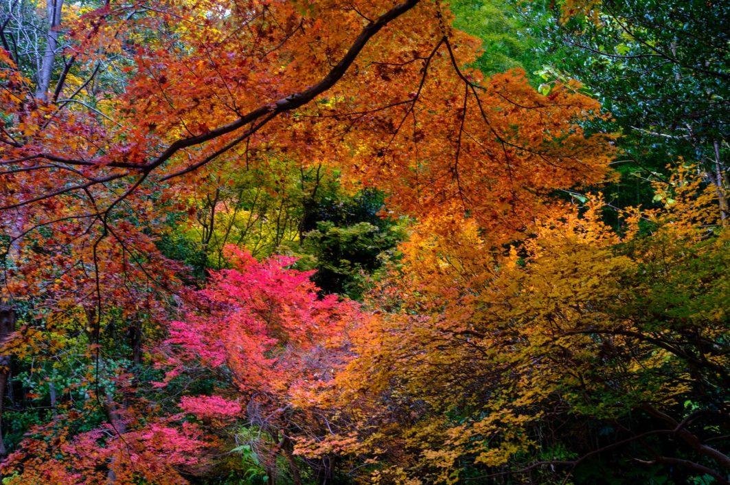 Kanazawa Fall - Kanazawa Tips