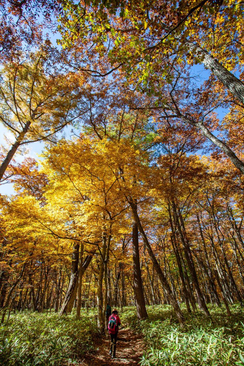 Hiking in Nikko - Okunikko