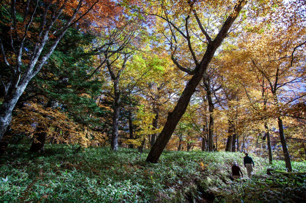 Seasons of Japan