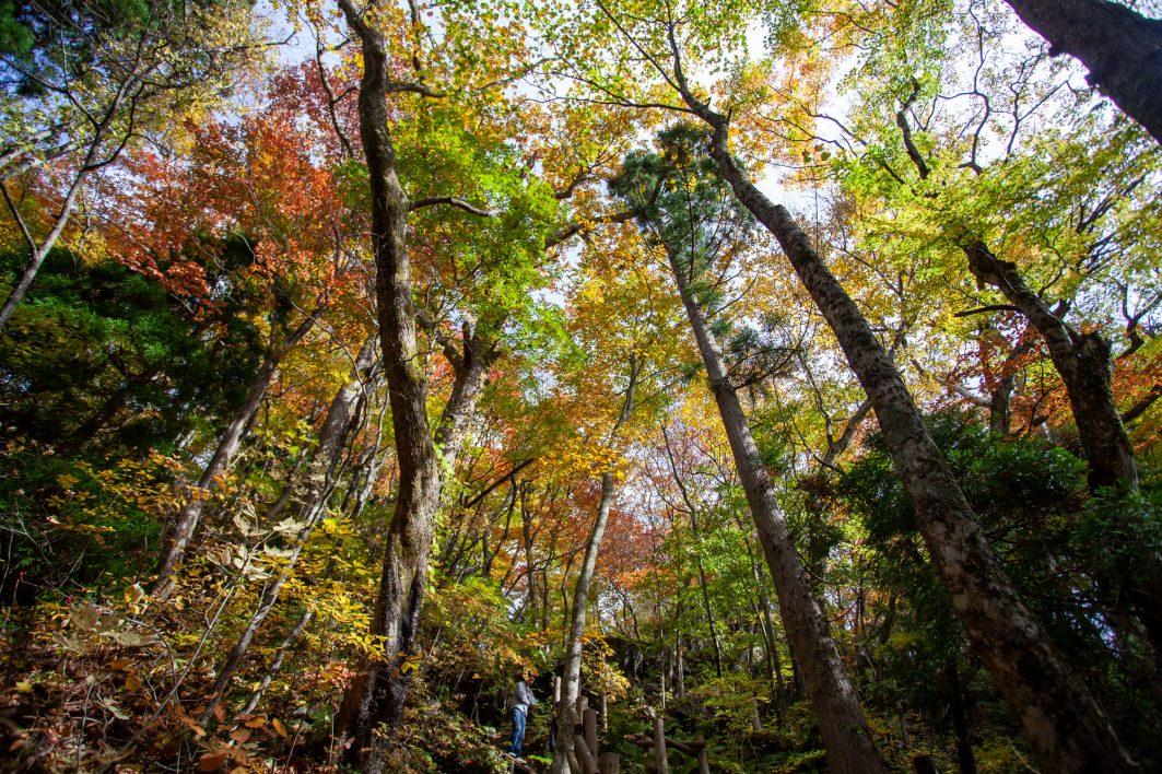 Oirase Stream Hike - Hikes in Japan