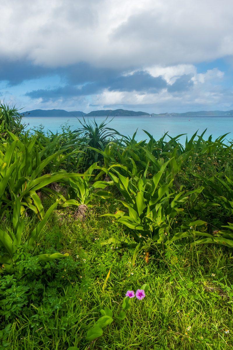 Okinawa Morning