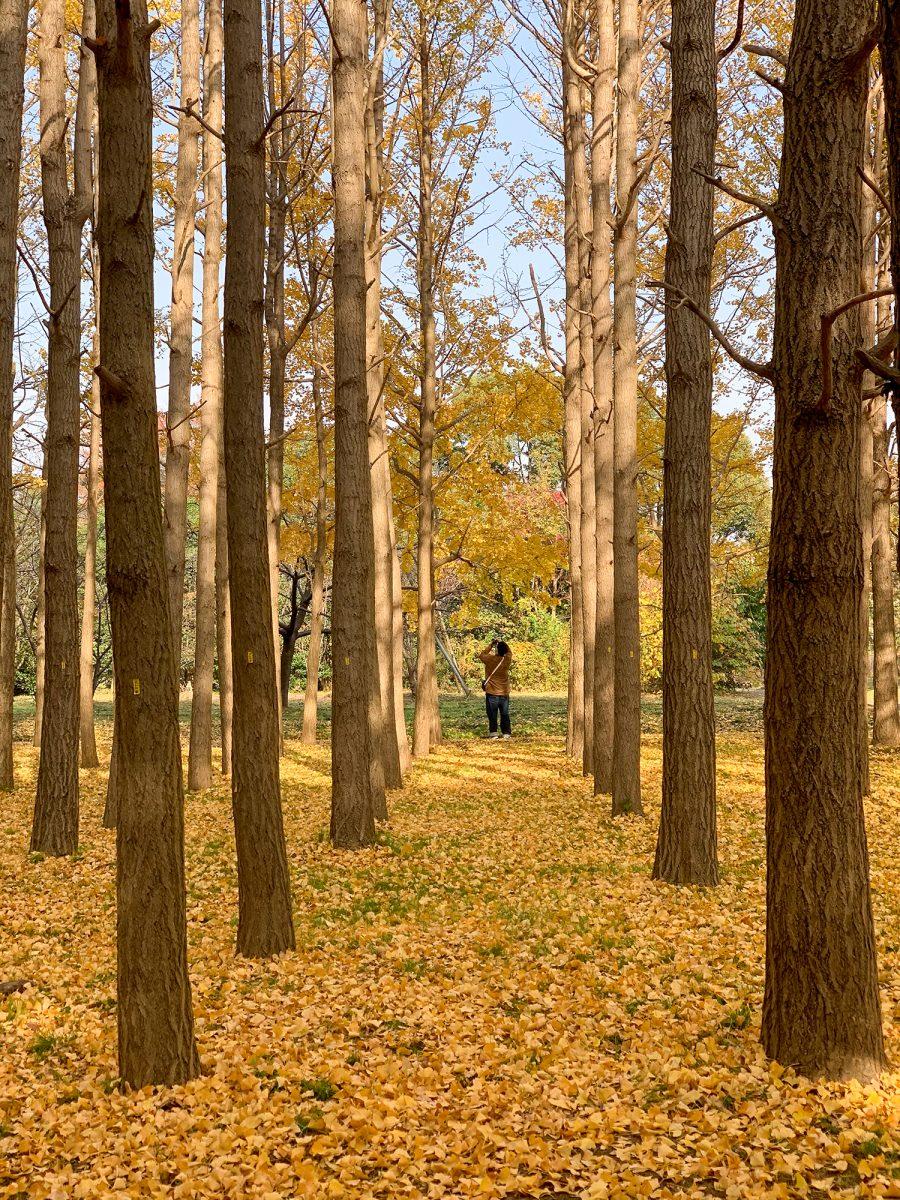 Fall in Mizumoto Park