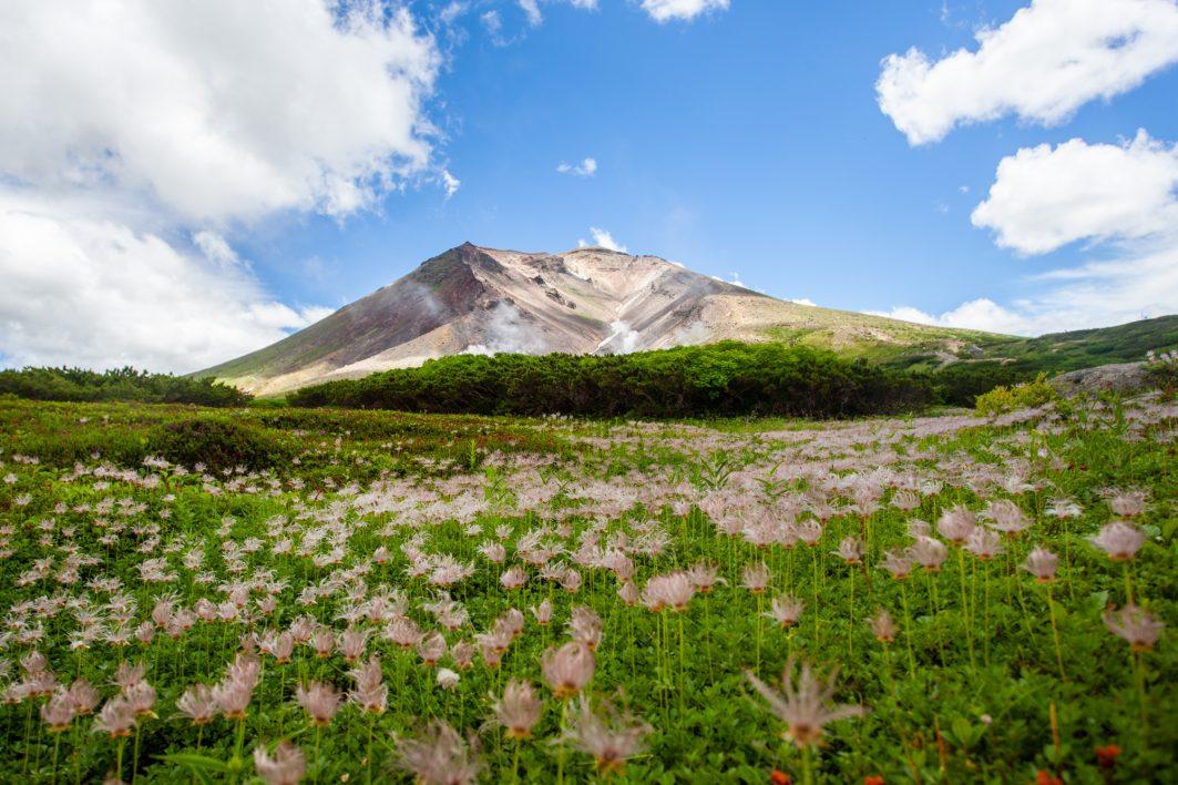 Alpine flowers guarding Asahidake